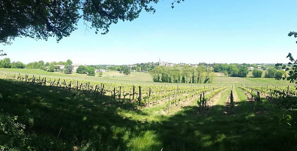 Les vignes du Château Bessan