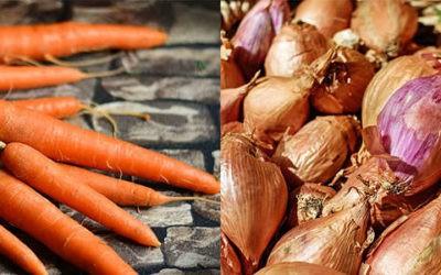 Cannelloni de carottes et grenier medocain