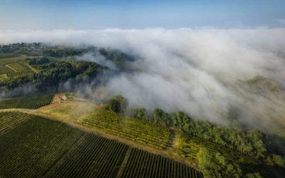 AOC Côtes de Bordeaux