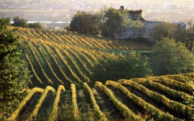 La nature autrement, si proche de Bordeaux