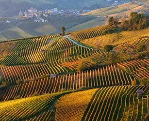Paysage viticole du Piémont : Langhe-Roero et Monferrato