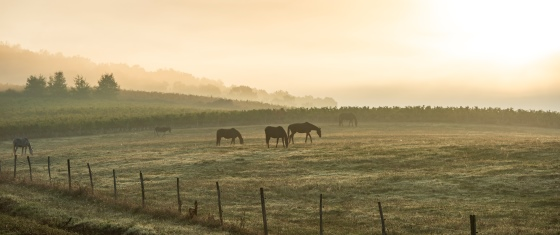 chevaux_cadillac