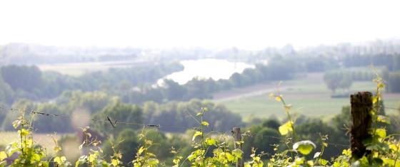paysages-coteaux-cadillac